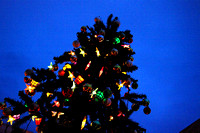 Christmas Tree, Milton Street, Leamington NZ