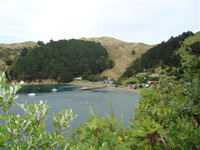 This is the French Pass Settlement, wharf, houses etc