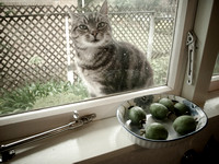 Coco and feijoas kitchen window sill