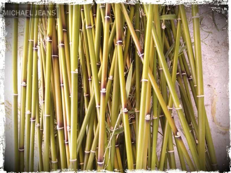 Bamboo garden stakes in production